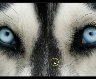 How dog see the world