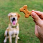 How many dog biscuits per day