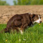 How often dogs poop