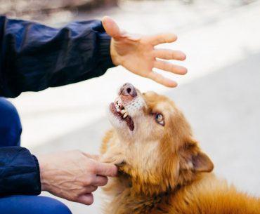 When dog bites