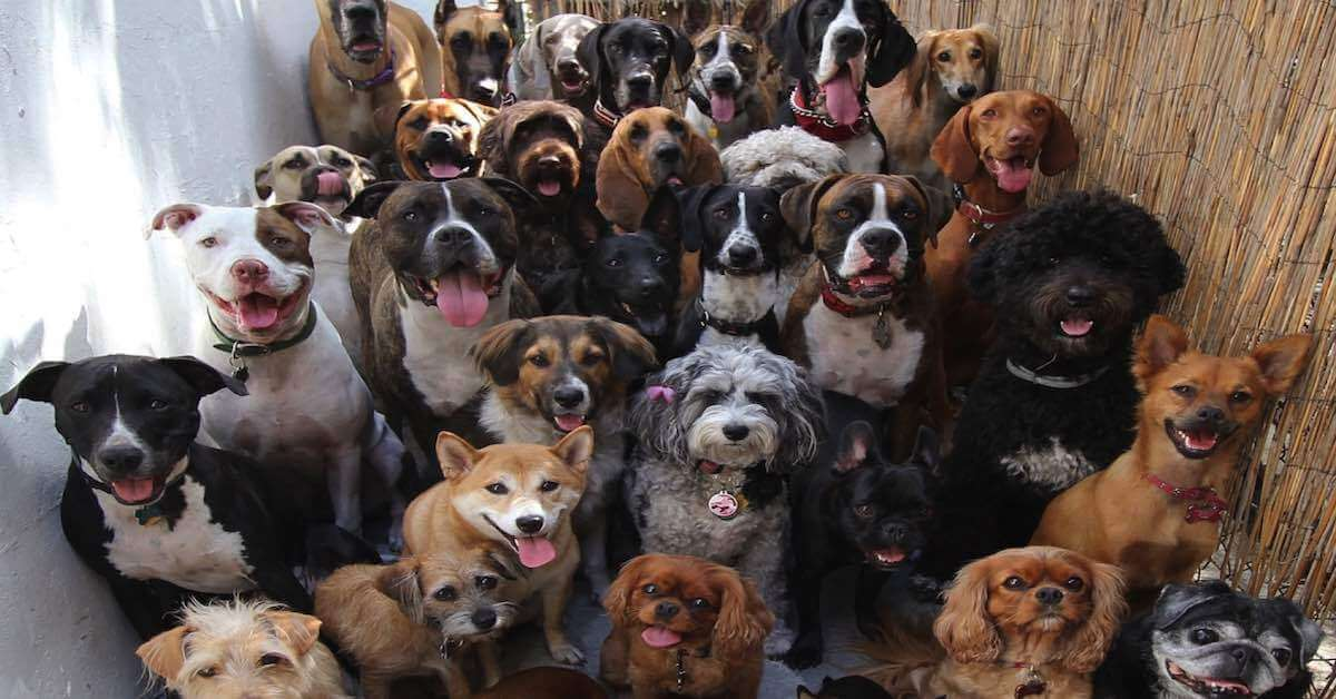 Which dog breed is best