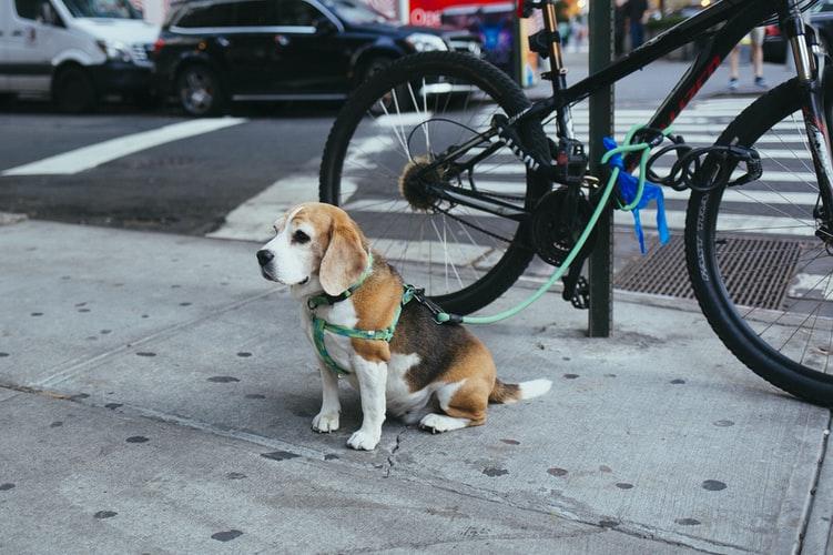 what dog should i buy