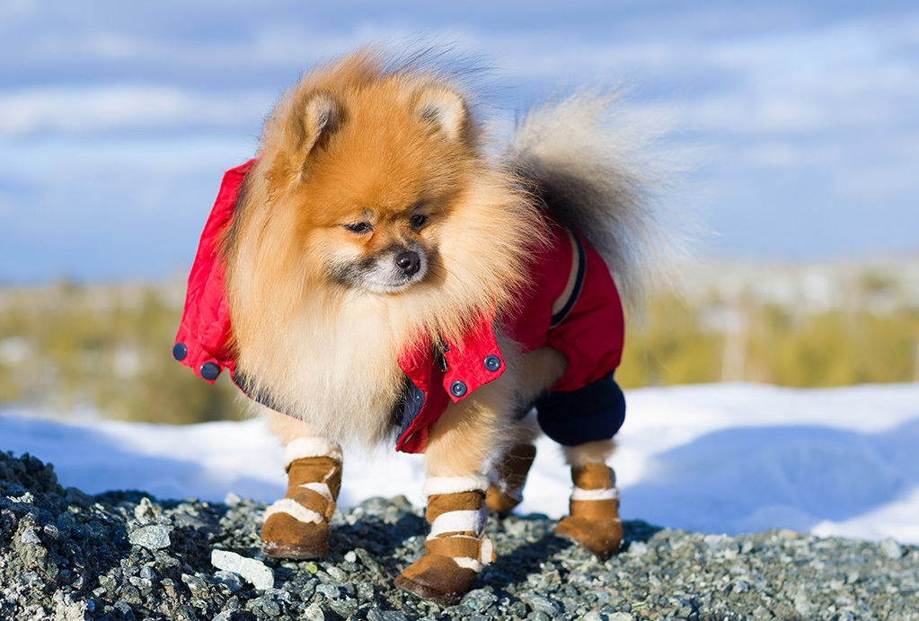 Are dog shoes good for dogs