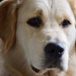 Which dog is best for beginners